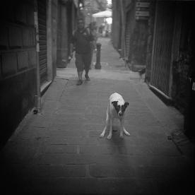 2012_06_10_cane_che_caga_franka