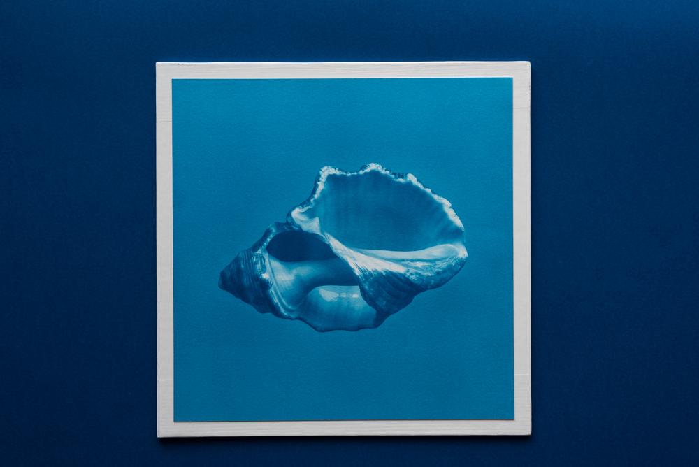 shell cyanotype print