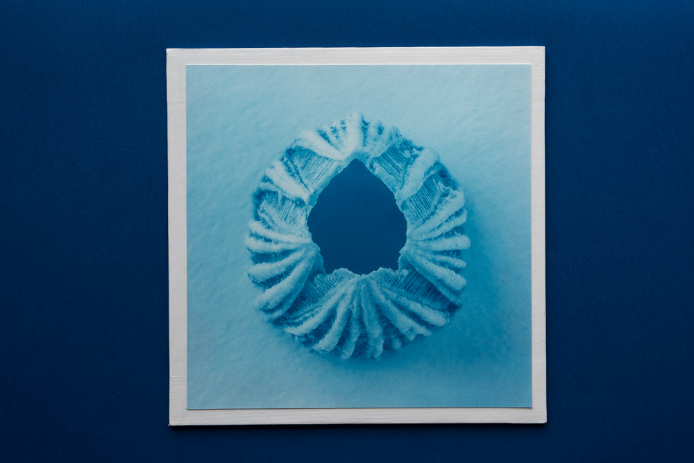 balano cyanotype print