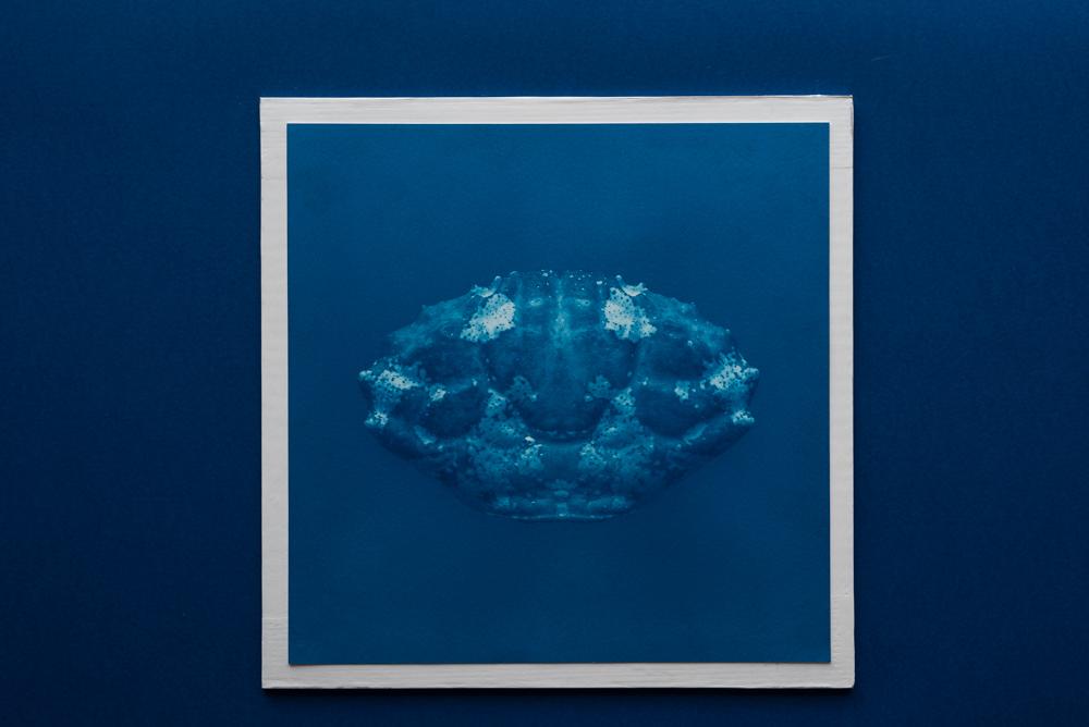 crab cyanotype print