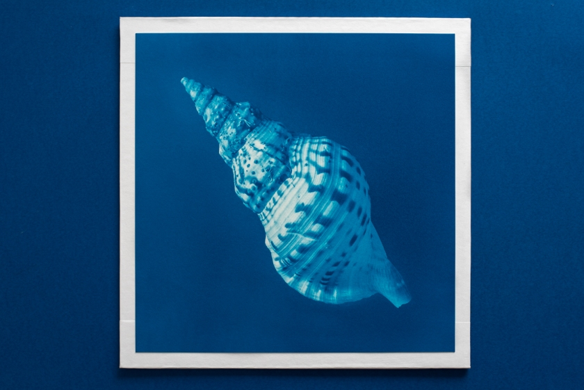 macro large triton cyanotype