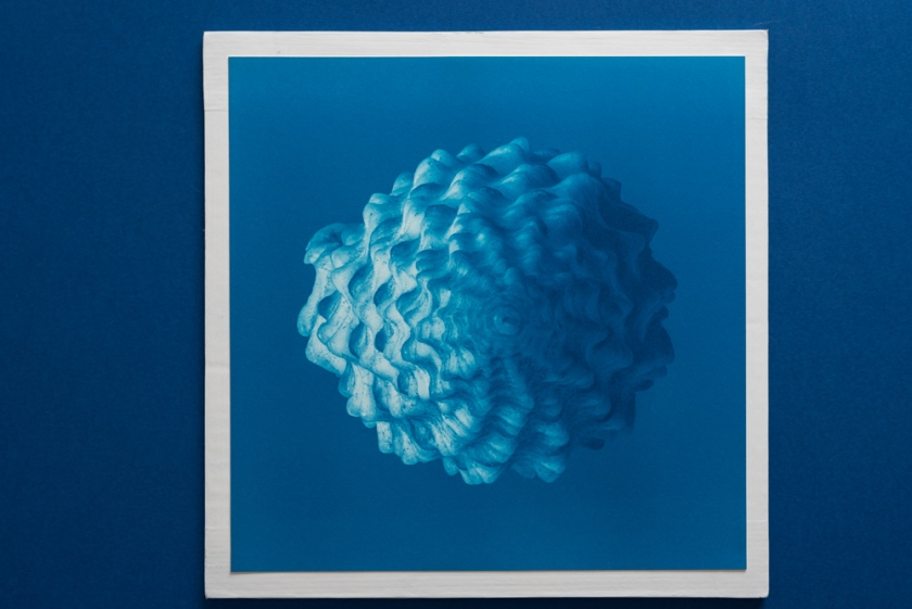 pointy shell cyanotype