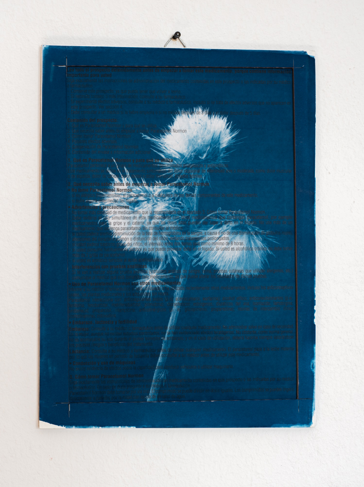Medicine Plant cyanotype cardo