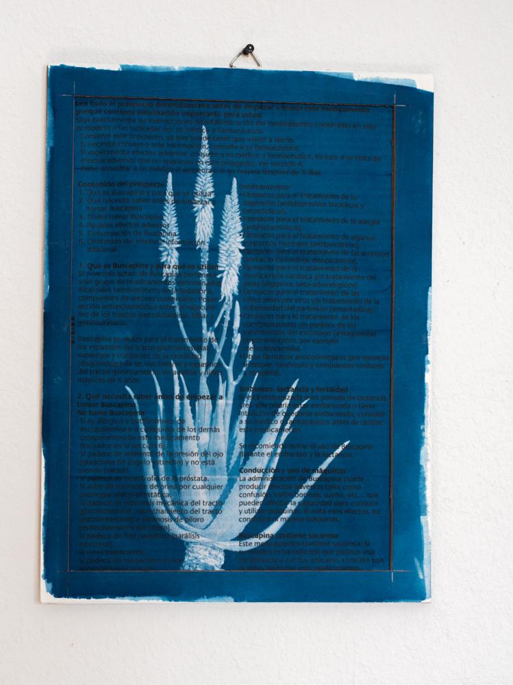 Medicine Plant cyanotype aloe