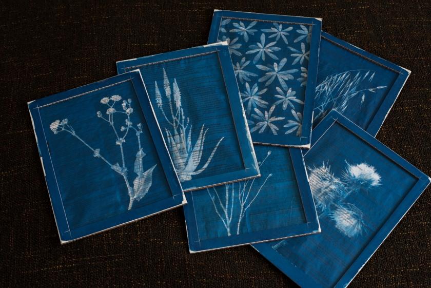Medicine Plant cyanotype
