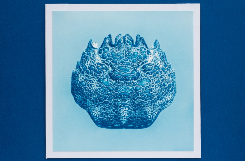 macro white crab cyanotype (2)