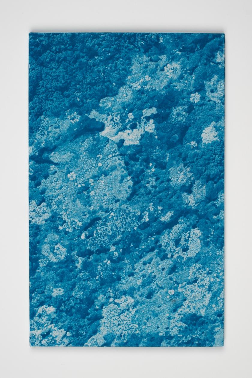 licheni01_DSC5066