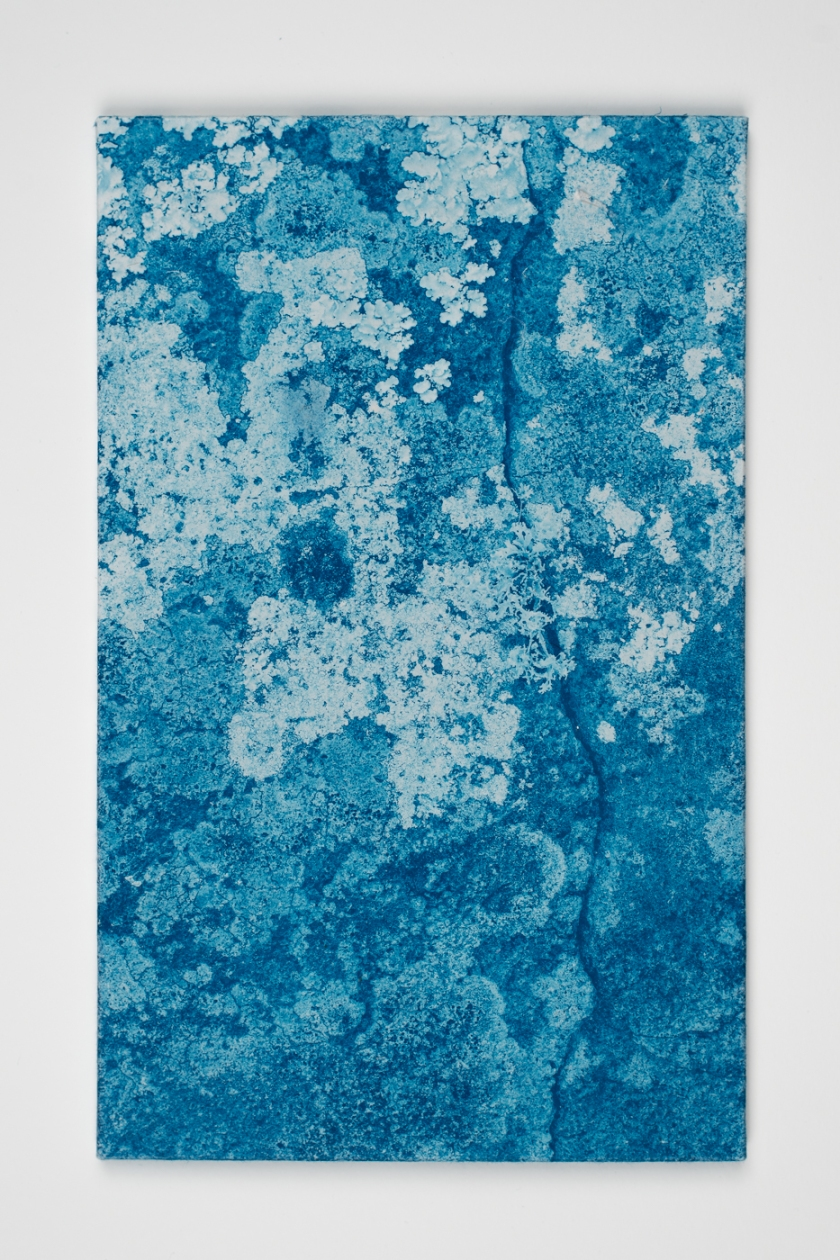 licheni02_DSC5071